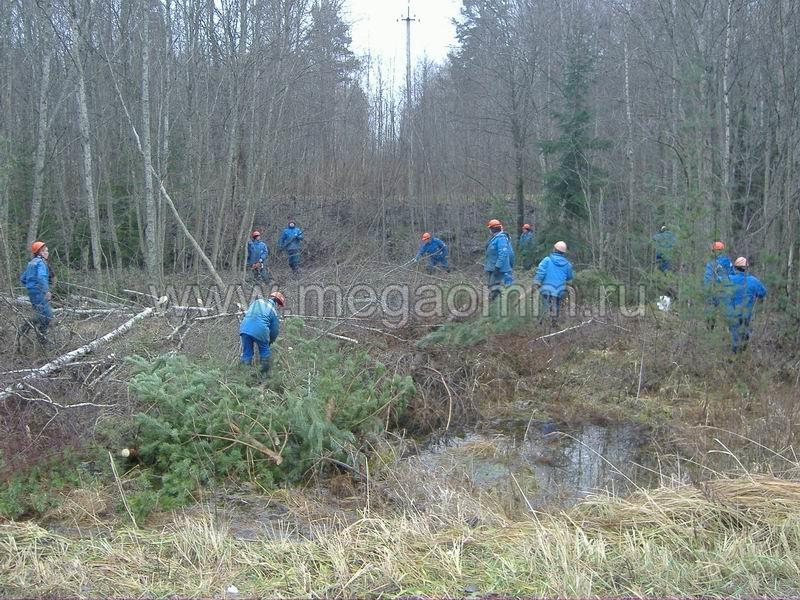 работа по вырубке леса вакансии автобусов
